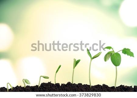 Growing. - stock photo