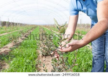 growing berries - stock photo