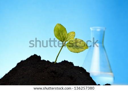 growing bio and organic plants - stock photo