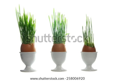 growing cereal in eggshell on white background - stock photo