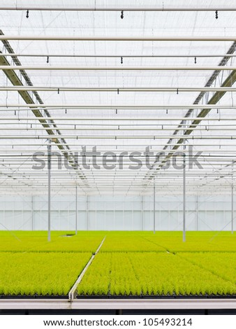 Growing conifers inside a greenhouse in the netherlands - stock photo