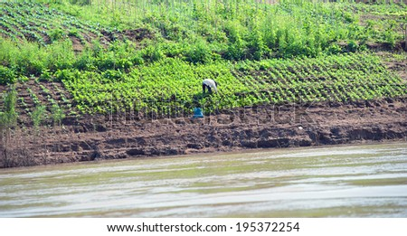Growing crops on river banks. Mekong River Cruise in Laos. Popular tourist adventure trip by slow boat from Huay Xai to Luang Prabang. - stock photo