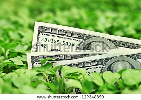 Growing dollars. - stock photo