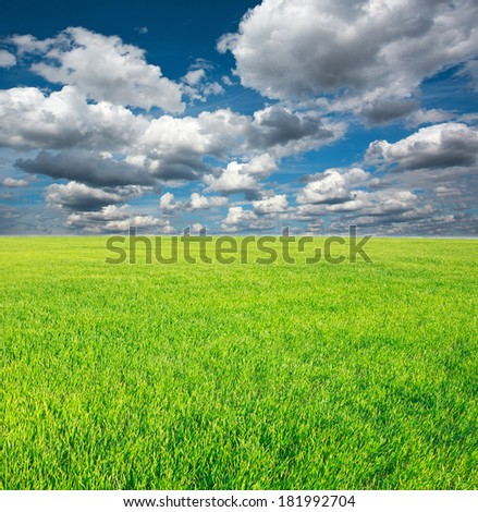 Growing field of green grass on a background of blue sky and white clouds - stock photo