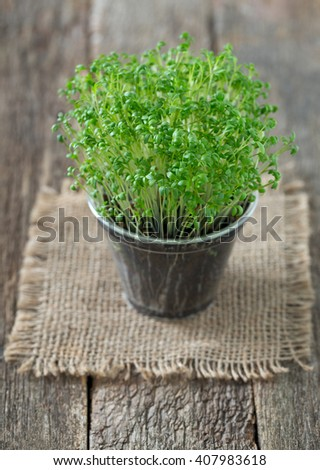 growing garden cress - stock photo