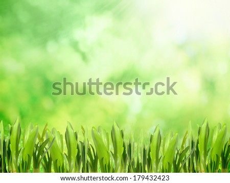 Growing grass in the park on spring day