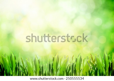 Growing grass in the park with soft spring sunlight