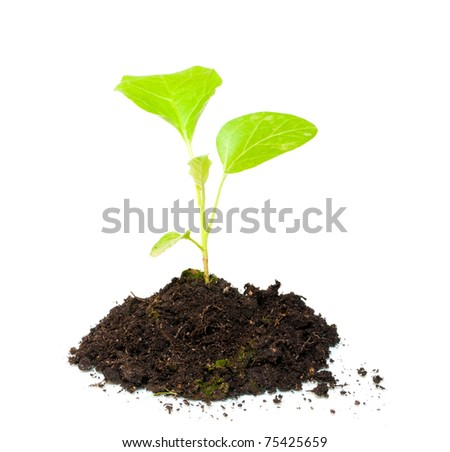 Growing green plant isolated on white background - stock photo
