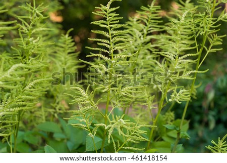 growing in the garden plant. Blurred background. Summer