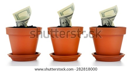 Growing money in flowerpots isolated on white - stock photo