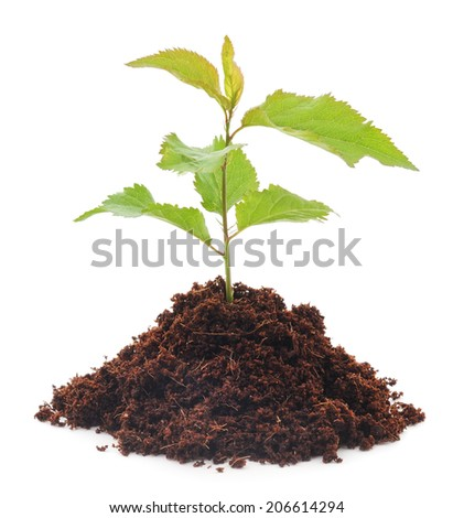 growing new little plant isolated on white - stock photo