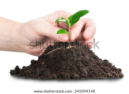 growing new  plant on pile of soil - stock photo