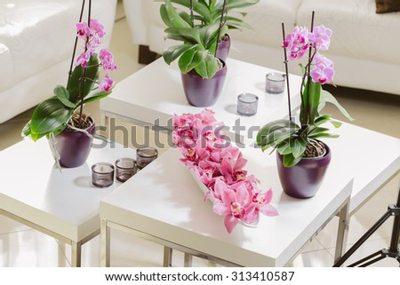 Growing pink orchid with petals arrangment on white table
