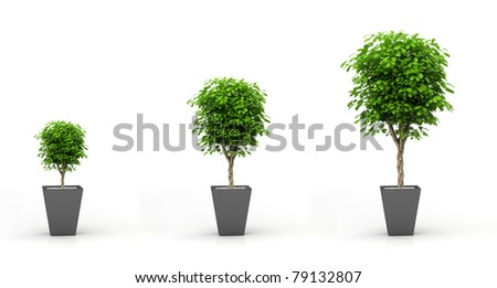 Growing plant concept