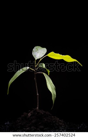 Growing plant in the ground on black - stock photo