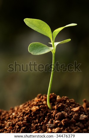 Growing plant-New life - stock photo