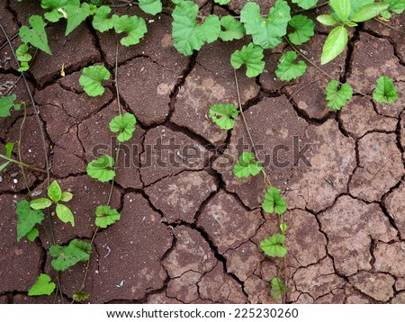 growing plant on drought land - stock photo