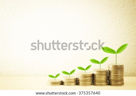 Growing plant on row of coin money and free space for finance and banking concept background - stock photo