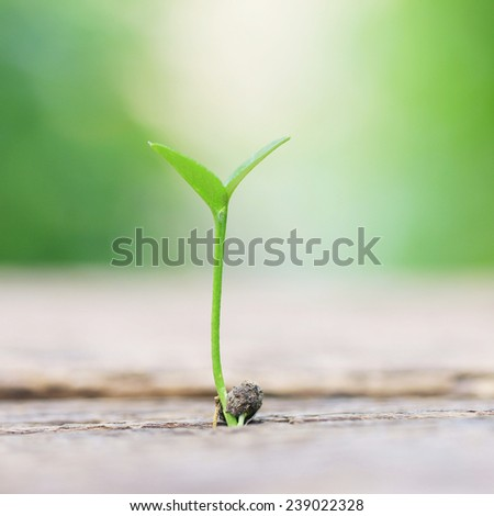 Growing plant on wooden table  - stock photo