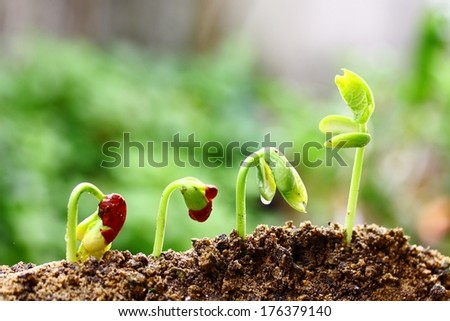 Growing plants - stock photo