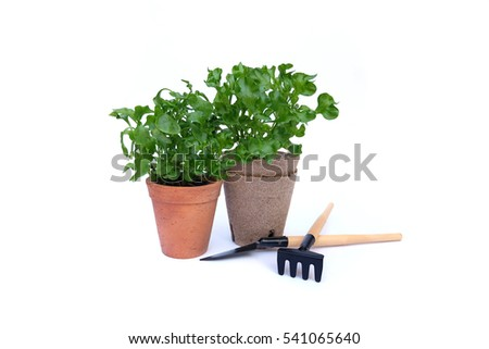 Growing seedlings in peat tablet on white background,tools garden