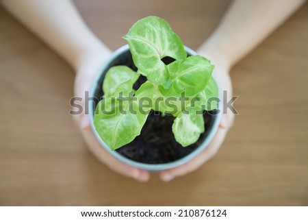 Growing small green plant in the hands - stock photo