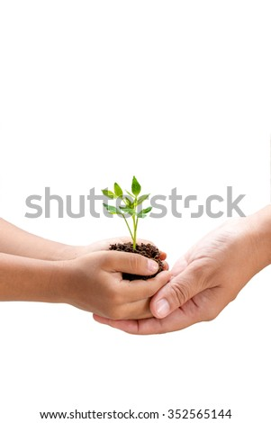 Growing small plant in a hand