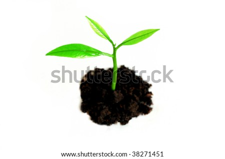 Growing sprout against white background
