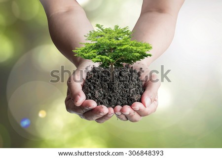 Growing tree on humus topsoil in hands (shallow focus): Isolated human hands holding big tree with top soil on blurred nature background of green leaves bokeh against sun flare Environmental concept