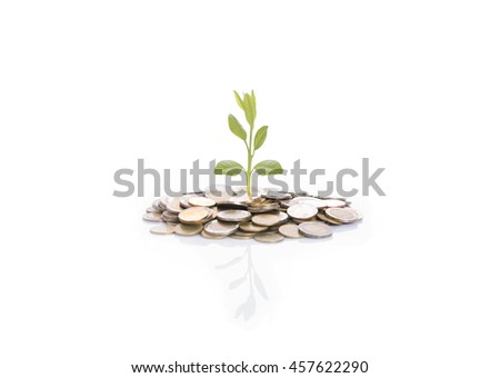 Growing tree on stack coin isolated on white background.