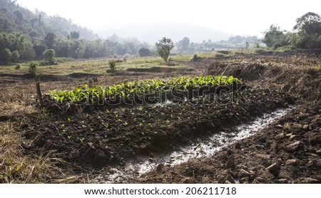 growing vegetable plot in farmland - stock photo