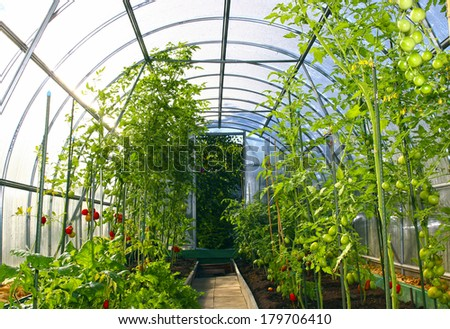 Growing vegetables in greenhouses made of transparent polycarbonate  - stock photo