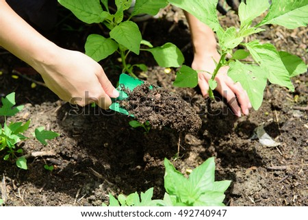 Kitchen Garden Stock Images, Royalty-Free Images & Vectors