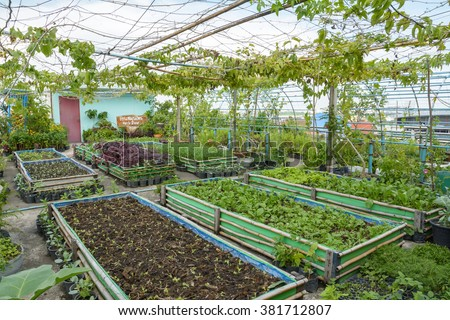 Growing Vegetables On Rooftop, Rooftop Garden, Vegetable Garden On The  Rooftop