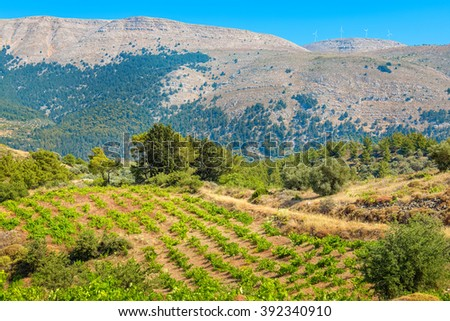 Growing vines in the vineyard. Rhodes, Dodecanese islands, Greece - stock photo