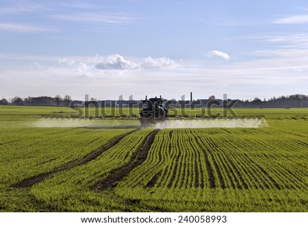 Growing wheat on the field.