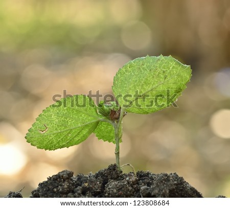 growing young plant - stock photo