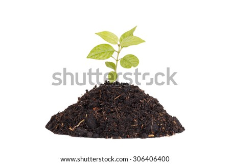 Growing young plant on white background