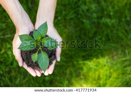 Growth concept: fresh sprout ready to be planted - stock photo