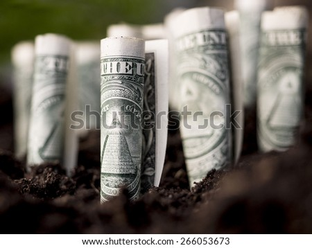 Growth concept, growing dollar bills in soil.