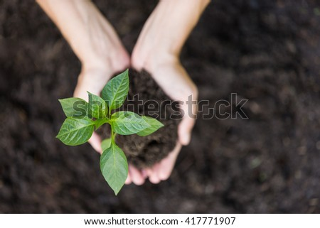 Growth concept: planting young seedling