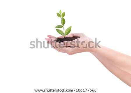 growth concept with small plant in female hands, new life - stock photo