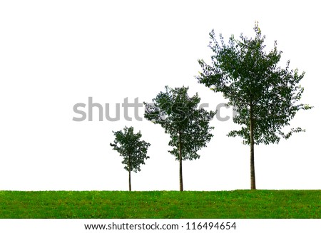 Growth concept with three growing trees of different size. On white background. - stock photo