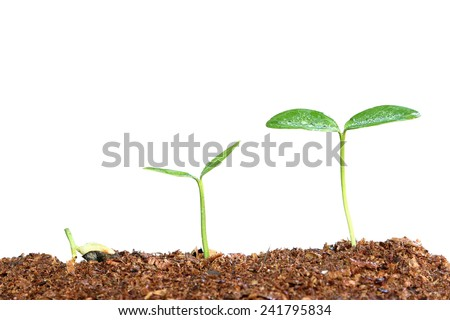Growth of new life with water drops on white background - stock photo