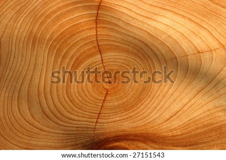 growth ring - stock photo