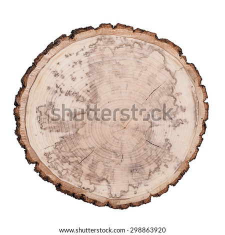 Growth rings. Isolated white background - stock photo