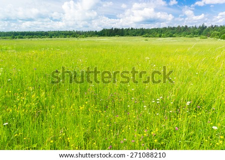 Growth Season Field Freedom  - stock photo