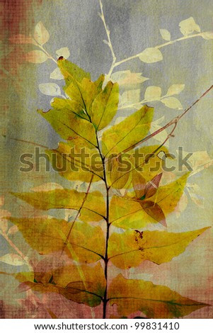 Grunge, artistic background with various leaves. - stock photo