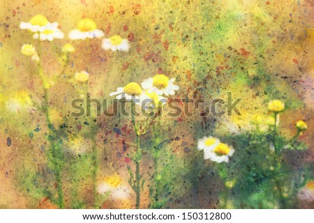 grunge artwork with chamomile flowers and colorful watercolor strokes - stock photo