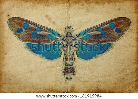 Grunge background with blue butterfly  - stock photo